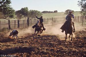 working cowboys gallery
